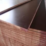 供应中铁二局建筑木模板防水耐用德州星冠木业