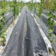 保湿防草布的规格和作用