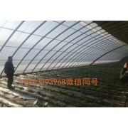 河北蔬菜棚,草莓棚,圆管棚材料加工厂家
